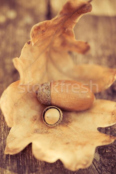 ストックフォト: オーク · 木製のテーブル · 秋 · 葉