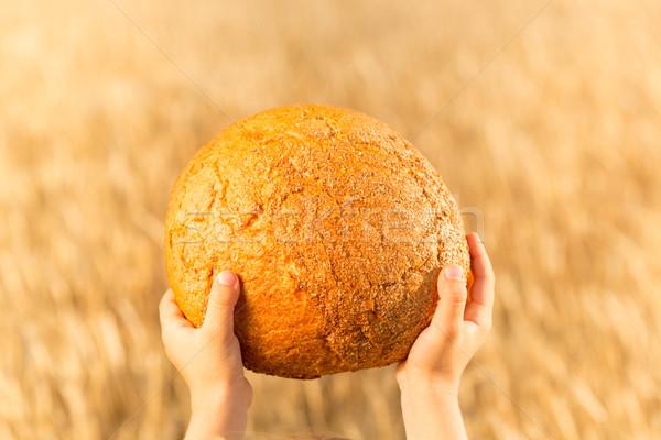 Casero pan manos trigo otono campo Foto stock © Yaruta