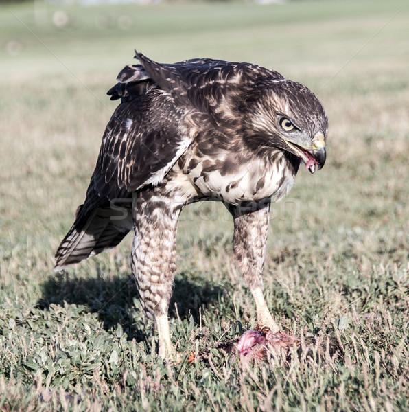 少年 食べ リス 鳥 餌食 ストックフォト © yhelfman