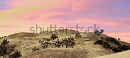 Vibrant Sunset of California Rolling Hills Stock photo © yhelfman