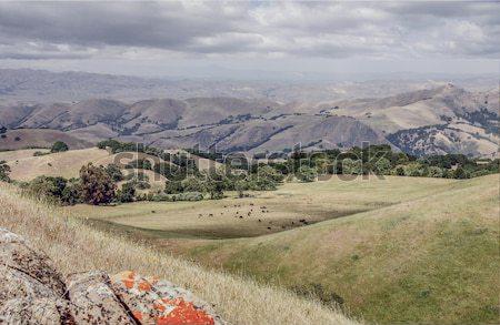 Northern California Landscape. Sunol-Ohlone Regional Wilderness Stock photo © yhelfman