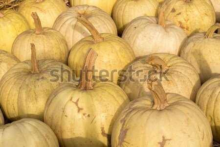 Owl's Eye Pumpkins in a Pumpkin Patch in Northern California Stock photo © yhelfman