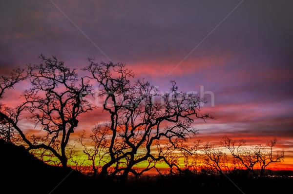 Ognia niebo drzewo sylwetka szczyt parku Zdjęcia stock © yhelfman
