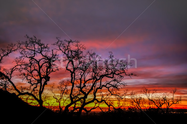 Brand hemel boom silhouet park Stockfoto © yhelfman