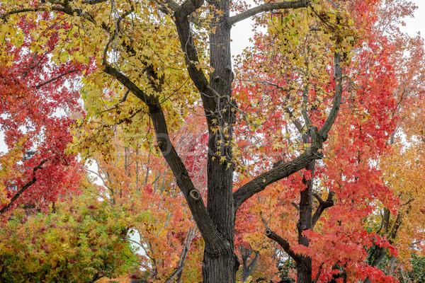 Jesienią Święty mikołaj California USA streszczenie tle Zdjęcia stock © yhelfman