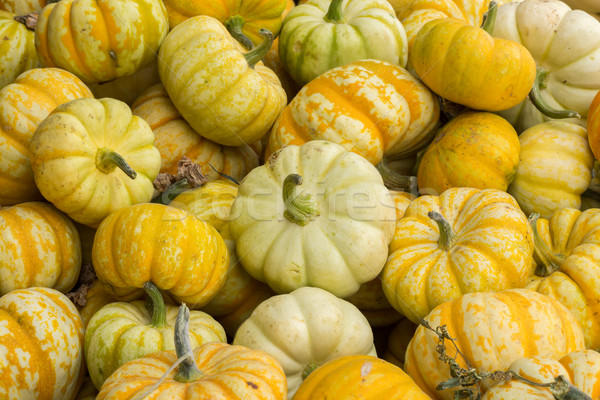 Miniature Pumpkins on a Pumpkin Patch stand in Northern California Stock photo © yhelfman