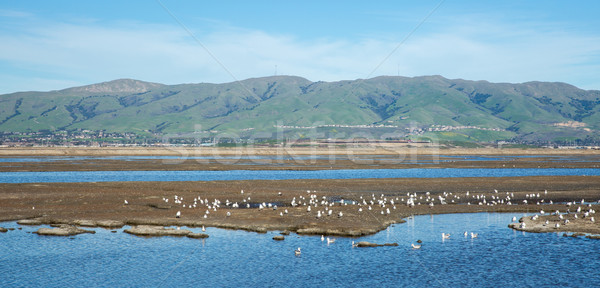 San Francisco South and East Bay Landscape, Northern California Stock photo © yhelfman