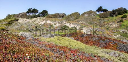 Coastal Views of the Pacific Ocean Bluffs from Fort Funston Stock photo © yhelfman