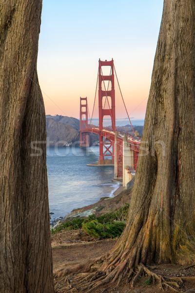 Golden Gate Bridge Through Cypress Trees. Stock photo © yhelfman