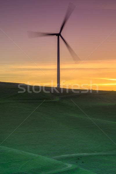 Lone wind turbine spinning on a grassy hillside sunset. Stock photo © yhelfman