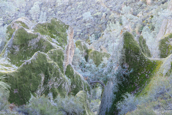 Volcanic rocks covered with lichen. Stock photo © yhelfman
