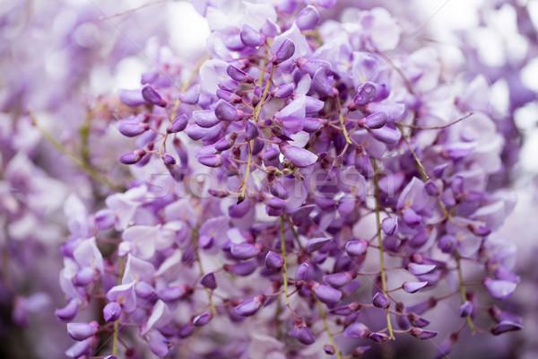 Wiosna wiosną świetle piękna niebieski Zdjęcia stock © yhelfman