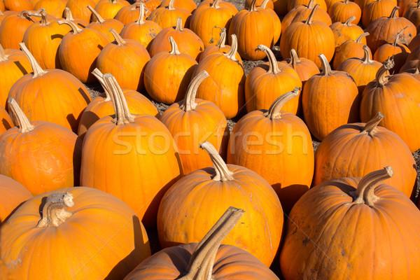 Pumpkin Patch Goodies Stock photo © yhelfman