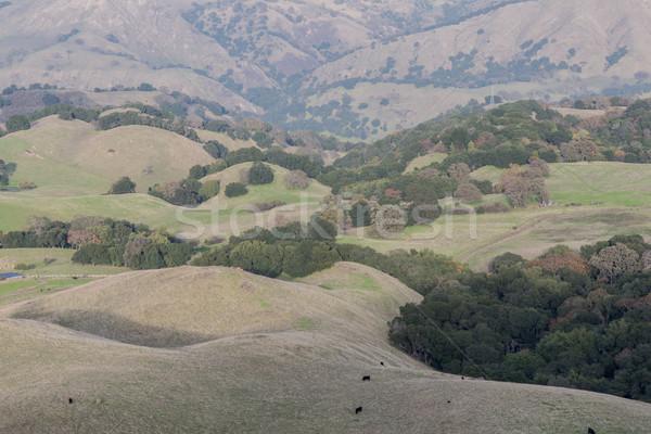 San Francisco East Bay Landscape Stock photo © yhelfman