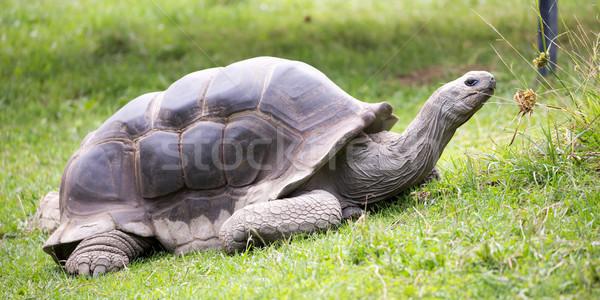 óriás teknősbéka szigetek atoll Seychelle-szigetek egy Stock fotó © yhelfman