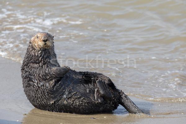 Alerter mer mousse atterrissage plage sable Photo stock © yhelfman