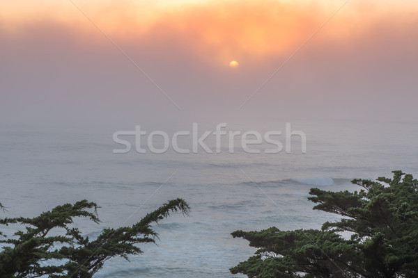 Pacific Ocean Foggy Sunset With Cypress Trees. Stock photo © yhelfman