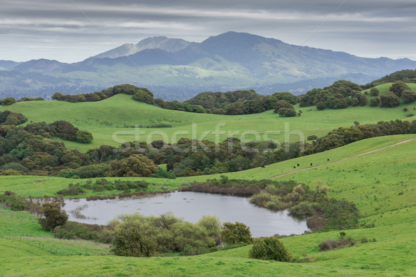 Stock photo: Mount Diablo from Briones Regional Park