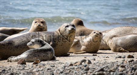 Puerto posando costa playas marinos reserva Foto stock © yhelfman