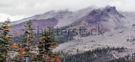 Mount Shasta and pine trees from Grey Butte Trail, Siskiyou County, California, USA Stock photo © yhelfman