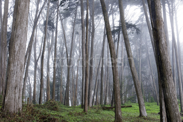 Forêt brouillard San Francisco Californie USA Photo stock © yhelfman