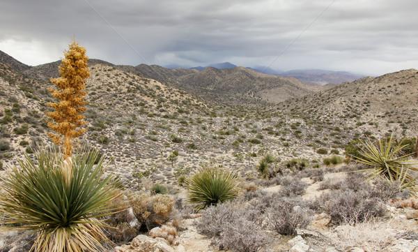 élevé vue nature sentier regarder vallée Photo stock © yhelfman