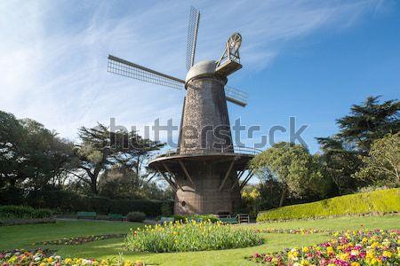 Reina tulipán jardín San Francisco holandés molino de viento Foto stock © yhelfman