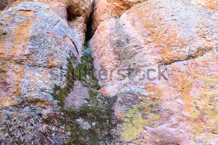 Samples of moss, algae and lichen on volcanic rock. Stock photo © yhelfman