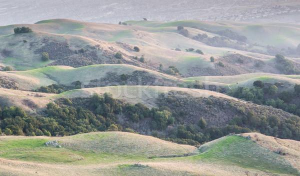 Californie collines silicium vallée classique chêne Photo stock © yhelfman