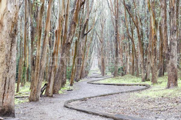 Bosje hout lijn regenachtig dag San Francisco Stockfoto © yhelfman