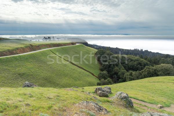 Mount Tamalpais Landscape in wintertime Stock photo © yhelfman