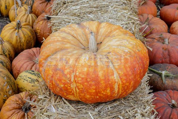 Cinderella Pumpkin on display for sale Stock photo © yhelfman