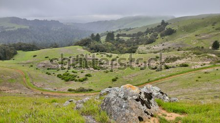 Foggy Spring at Russian Ridge Open Space Preserve, Santa Clara County, California Stock photo © yhelfman