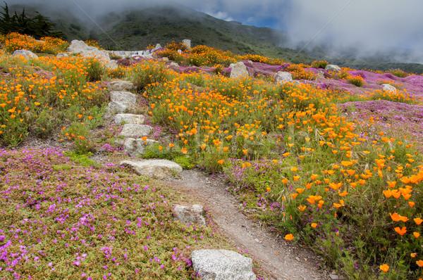 Hemel groot natuur landschap reizen Stockfoto © yhelfman