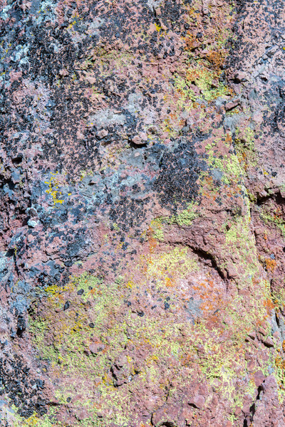Mixture of moss, algae and lichen on volcanic rock. Stock photo © yhelfman