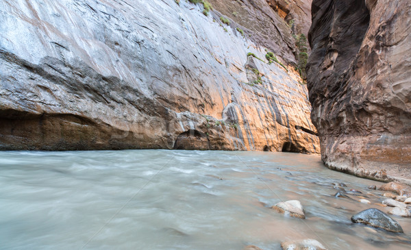 The Narrows of Virgin River, Zion National Park, Utah, USA Stock photo © yhelfman