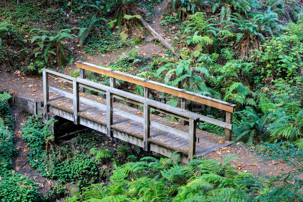 Wooden Bridge in Craig Britton Trail. Stock photo © yhelfman