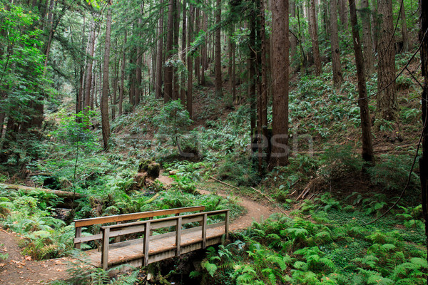 Bridge to Redwood Forest Stock photo © yhelfman