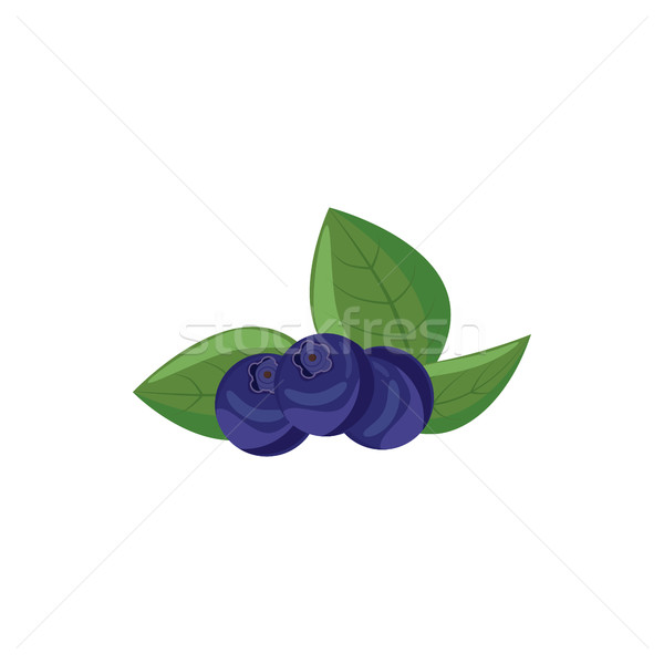Ripe bilberries with green leaves icon  Stock photo © ylivdesign