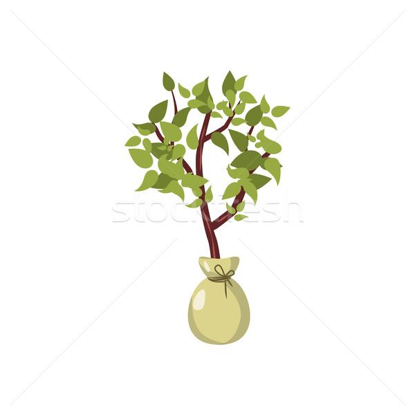 Planta de semillero icono Cartoon estilo blanco naturaleza Foto stock © ylivdesign