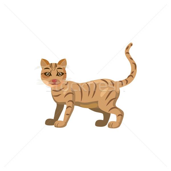 кошки икона Cartoon стиль белый лице Сток-фото © ylivdesign