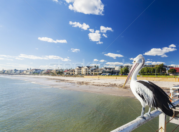 Pelican at a jetty in beachside suburb of Adelaide Stock photo © ymgerman