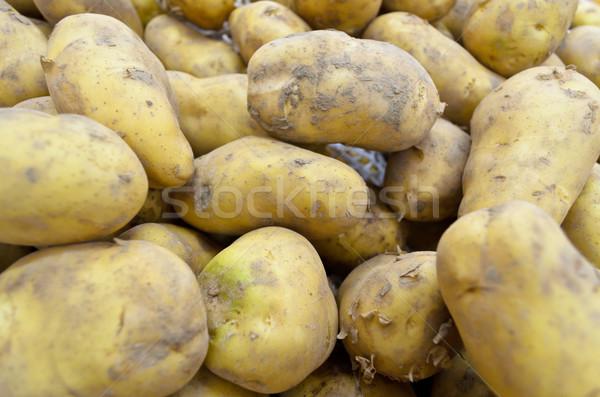 Raw potato tubers Stock photo © Yongkiet