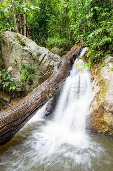 Piccolo cascata foresta pluviale stream Thailandia acqua Foto d'archivio © Yongkiet