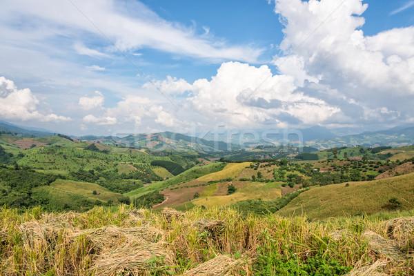 Farmland in northern Thailand Stock photo © Yongkiet