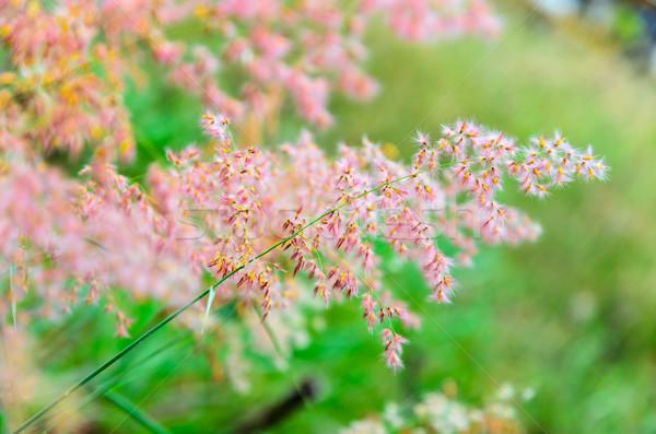 ピンクの花 草 美しい バラ 夏 緑 ストックフォト © Yongkiet
