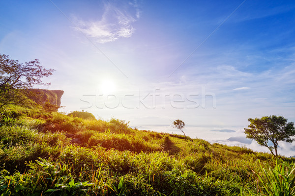 Sunrise on Phu Chi Fa Forest Park, Thailand Stock photo © Yongkiet