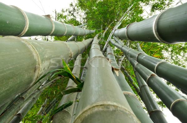 Bambu karınca görmek yeşil ağaç Stok fotoğraf © Yongkiet