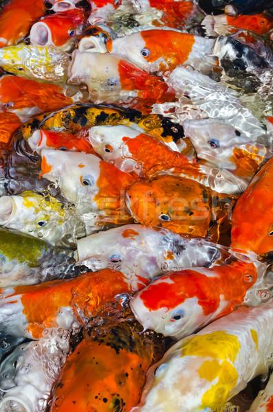 Kleurrijk veel koi karper samen Stockfoto © Yongkiet