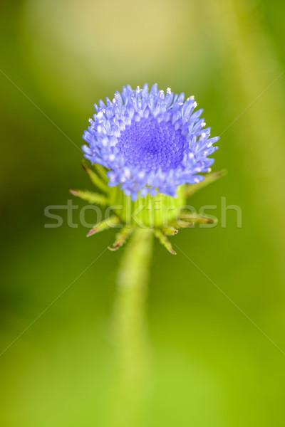 Foto stock: Belo · macro · flor · azul · pequeno · broto · flor